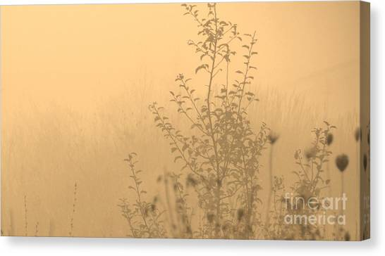 Land Of Wildness Canvas Print