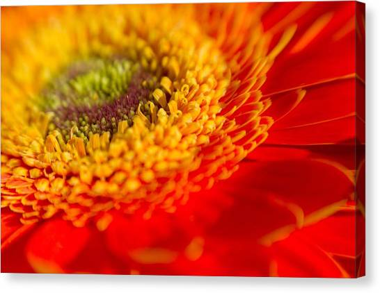 Landscape Of A Flower Canvas Print