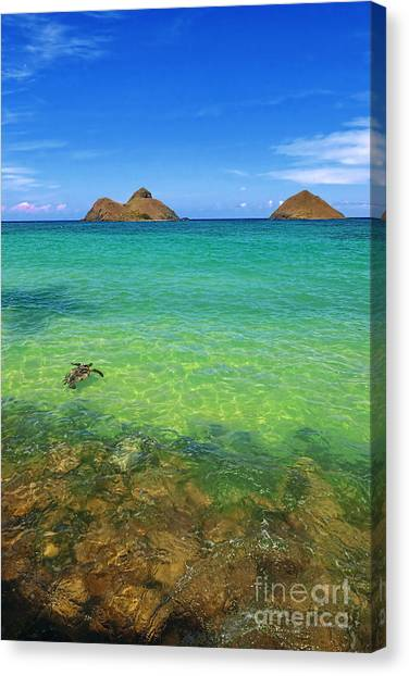 Lanikai Beach Sea Turtle Canvas Print