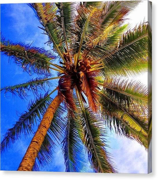 Banana Tree Canvas Print - #lanikai  #ocean #banana #palmtree by Andy Walters