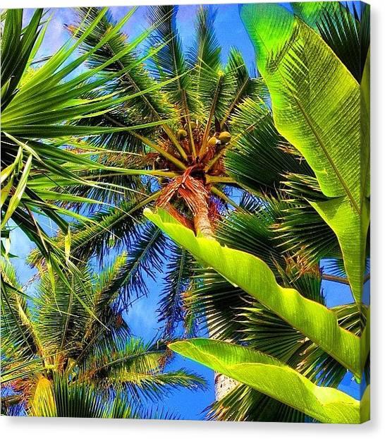 Banana Tree Canvas Print - #lanikai #ocean #palmtree #paradise by Andy Walters