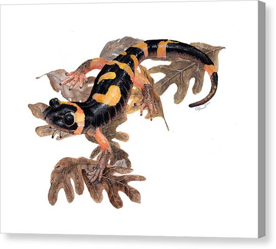 Large Blotched Salamander On Oak Leaves Canvas Print