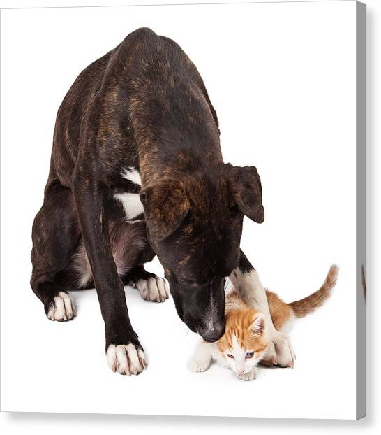Large Dog Playing With Kitten Canvas Print