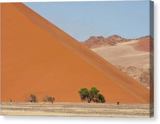 Namib Desert Canvas Print - Large Dune With Trees In Front by Jaynes Gallery