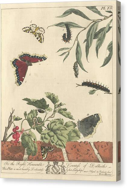 Magpies Canvas Print - Large Magpie Moth by Natural History Museum, London/science Photo Library
