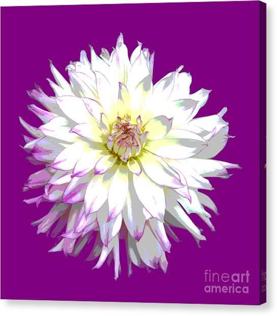 Large White Dahlia On Purple Background. Canvas Print by Rosemary Calvert