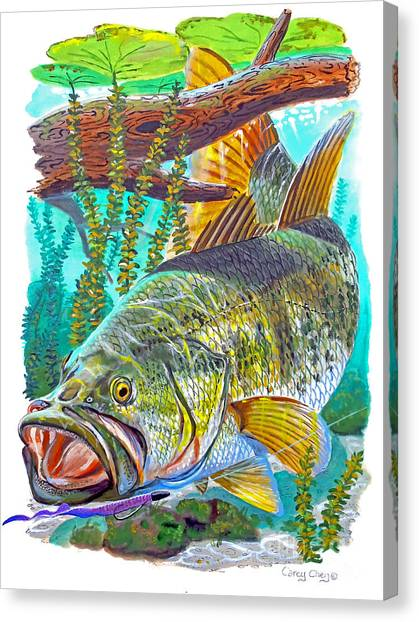 Catfish Canvas Print - Largemouth Bass by Carey Chen