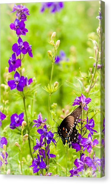 Larkspur Visitor Canvas Print