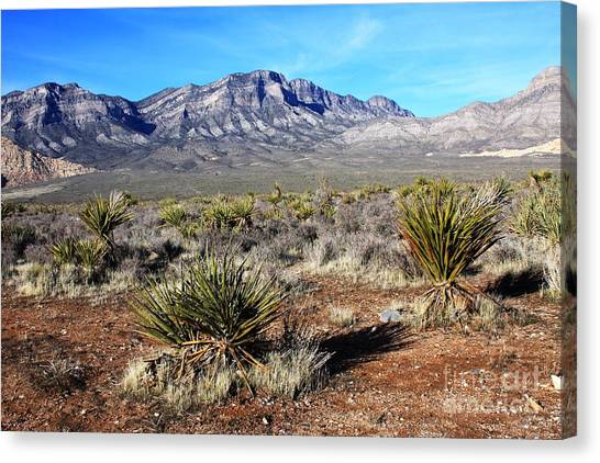 Las Vegas Desert Canvas Print by Kathlene Pizzoferrato