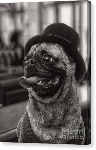 Pug Canvas Print - Last Call Pug Greeting Card by Edward Fielding