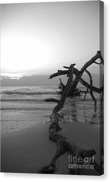 Canvas Print featuring the photograph Last Chance by Glenda Wright