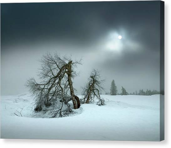 Birch Canvas Print - Last Days Of Winter by Nicolas Schumacher