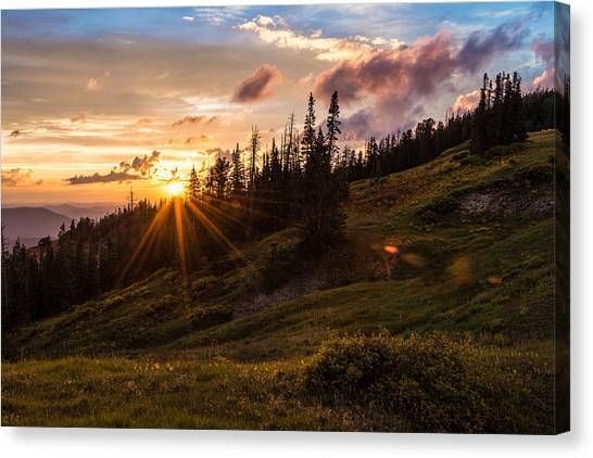Pine Trees Canvas Print - Last Light At Cedar by Chad Dutson
