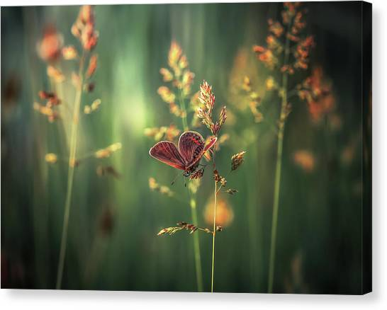 Bug Canvas Print - Last Light by Florentin Vinogradof