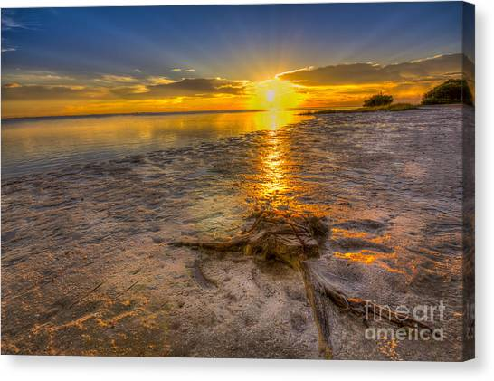 Mangrove Trees Canvas Print - Last Light Over The Gulf by Marvin Spates