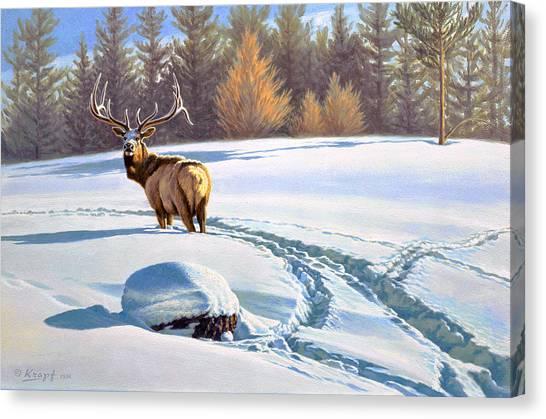 Elk Canvas Print - Last Look  -elk by Paul Krapf