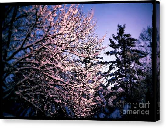 Last Peek Of Winter Sun Canvas Print