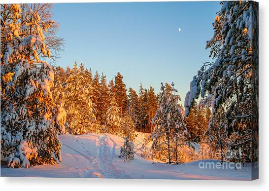 Last Rays Of Light In The Winter Forest Canvas Print