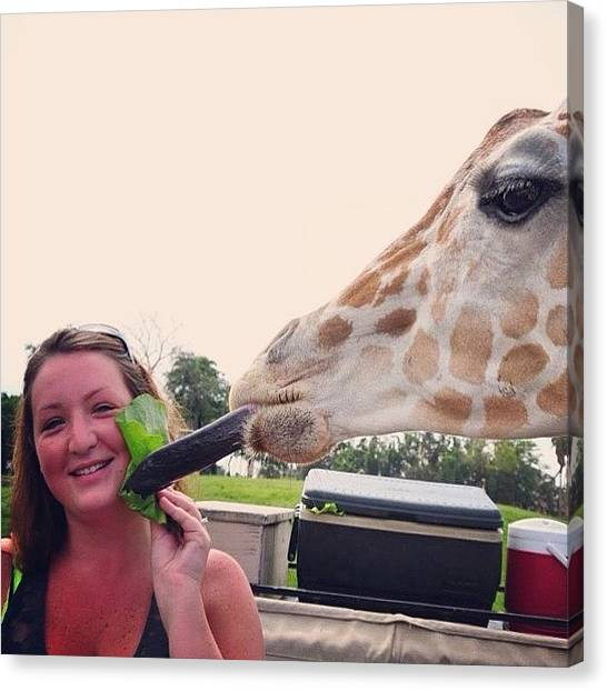 Giraffes Canvas Print - Last #tbt You Haven't #lived If You by Crystal Duncanson