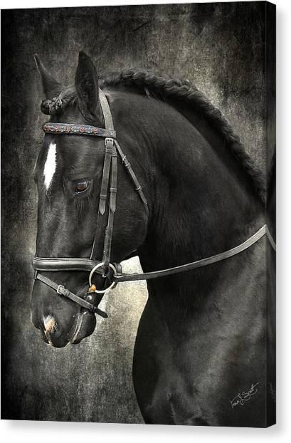 Black Stallion Canvas Print - Latcho's Shadow  by Fran J Scott