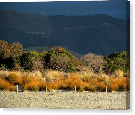 Late Afternoon Colours Canvas Print