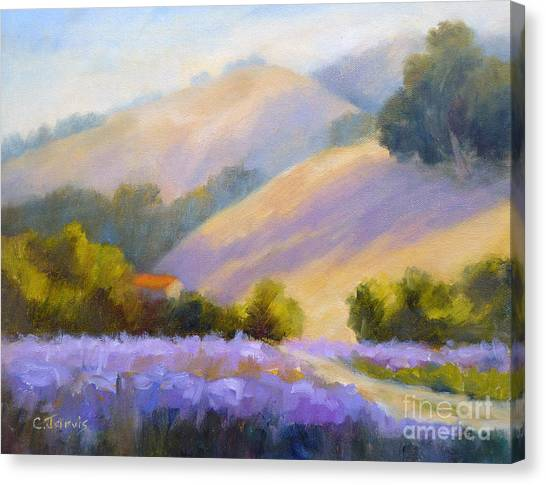 Late June Hills And Lavender Canvas Print