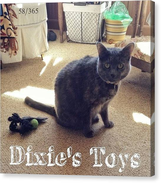 Kittens Canvas Print - #latergram Thursday I Caught #dixie by Teresa Mucha