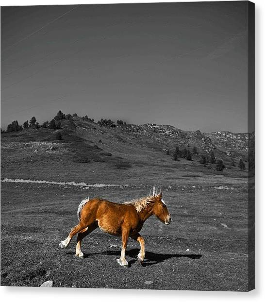 Horse Farms Canvas Print - laughter Is The Only Thing That'll by Xavier Borda