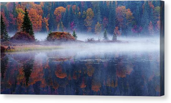 Maple Trees Canvas Print - Laurentian Forest by Mircea Costina