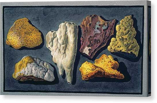 Mount Vesuvius Canvas Print - Lava Samples by Natural History Museum, London/science Photo Library