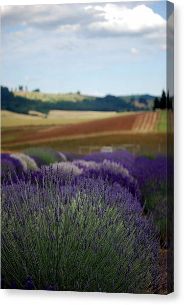 Lavendar Fields Forever Canvas Print by Mamie Gunning