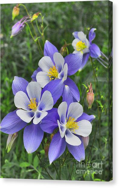 Canvas Print featuring the digital art Lavender And White Star Flowers by Mae Wertz