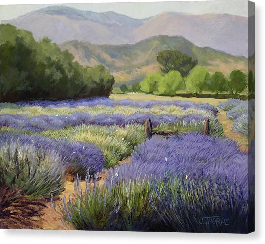 Lavender Blue Canvas Print