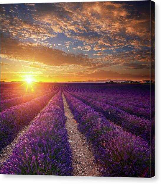 Lavender Field At Sunset Canvas Print by Mammuth