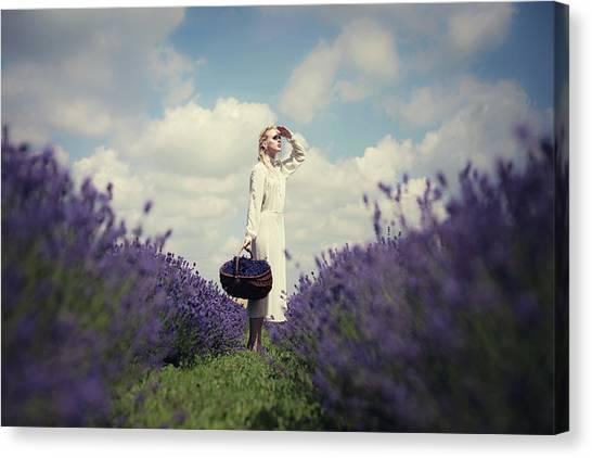 Scouting Canvas Print - Lavender Field by Dorota G?recka