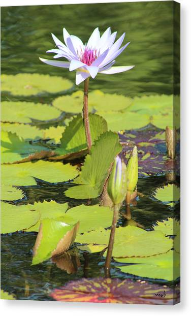 Lavender Flower On A Pond Canvas Print by Mark Steven Burhart