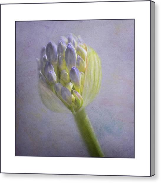 Lavender Haze Canvas Print