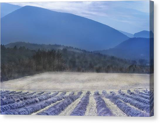 Lavender In Provence Canvas Print