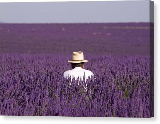 Lavender - Provence Canvas Print