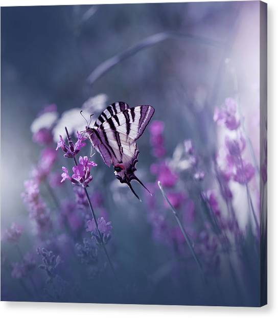Bug Canvas Print - Lavender Queen... by Juliana Nan