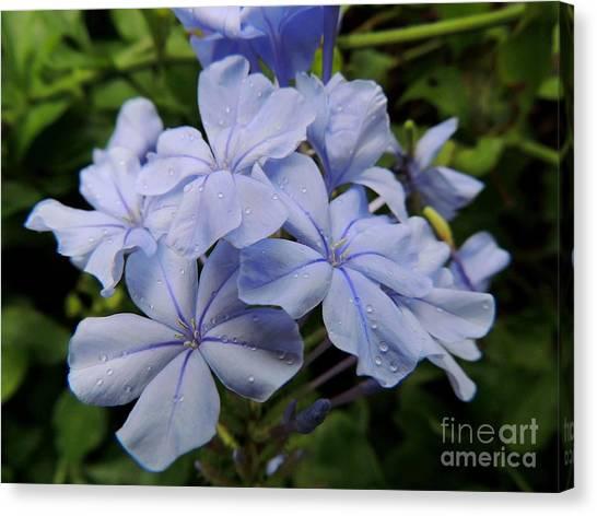 Lavender Raindrops Canvas Print