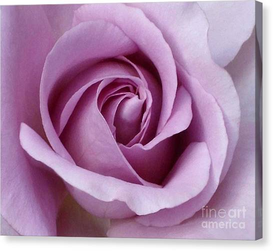 Lavender Rose Blossom 1 Canvas Print