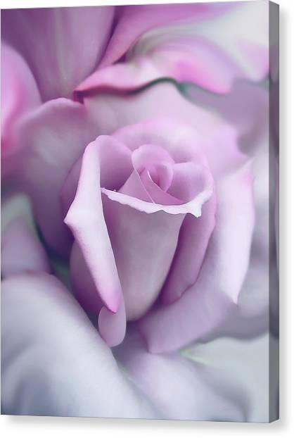 Lavender Rose Flower Portrait Canvas Print