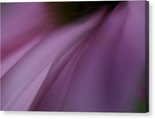 Lavender Slide 2 Canvas Print