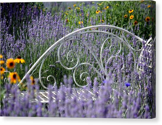 Lavender With Scrolled Settee Canvas Print