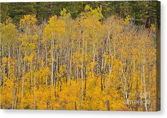 Layers Of Gold Canvas Print