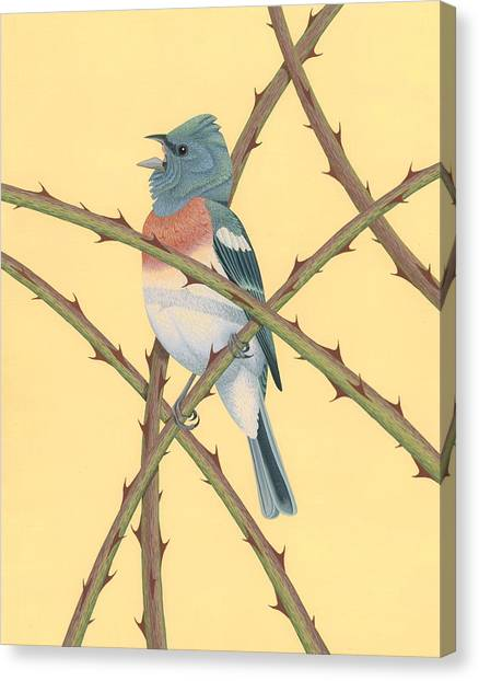 Blackberries Canvas Print - Lazuli Bunting by Nathan Marcy