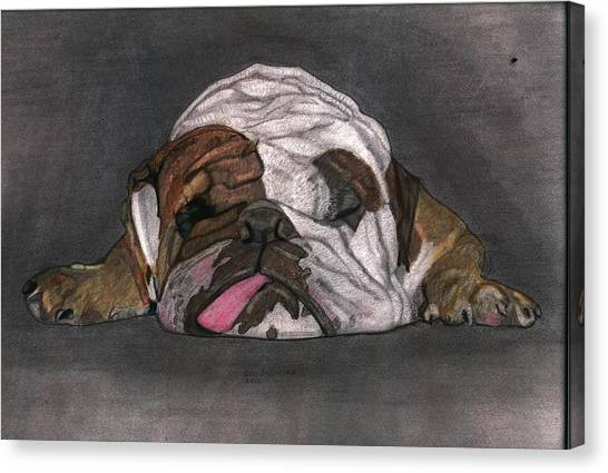 English Bull Dogs Canvas Print - Lazy Daisy by Don  Gallacher