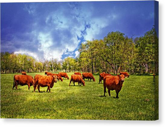 Brown Ranch Trail Canvas Print - Lazy Days On The Ranch by Lynn Bauer