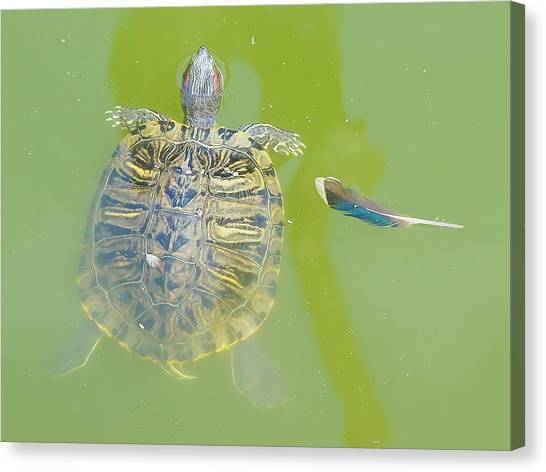 Canvas Print featuring the photograph Lazy Summer Afternoon - Floating Turtle by Menega Sabidussi